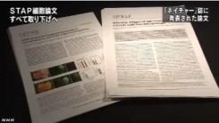 STAP細胞_全論文撤回へ_研究成果白紙に(NHKニュース2014年6月4日)_画像3