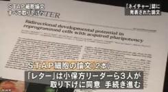 STAP細胞_全論文撤回へ_研究成果白紙に(NHKニュース2014年6月4日)_画像4