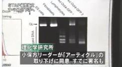 STAP細胞_全論文撤回へ_研究成果白紙に(NHKニュース2014年6月4日)_画像6