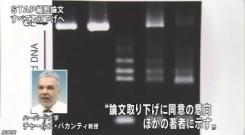 STAP細胞_全論文撤回へ_研究成果白紙に(NHKニュース2014年6月4日)_画像7
