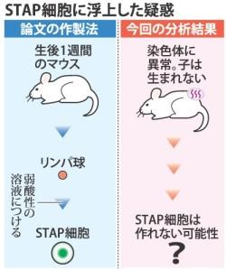 STAP細胞_論文ではあり得ない染色体、遠藤高帆・上級研究員ら解析