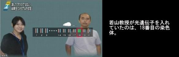 STAP細胞問題_若山教授のマウスと小保方STAP細胞の遺伝子情報の不一致_画像03