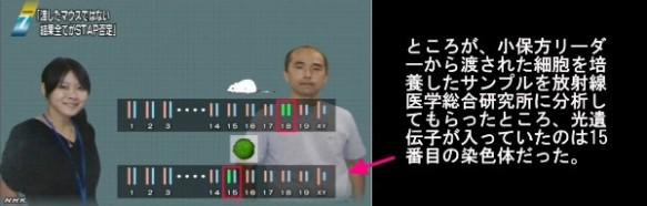 STAP細胞問題_若山教授のマウスと小保方STAP細胞の遺伝子情報の不一致_画像04