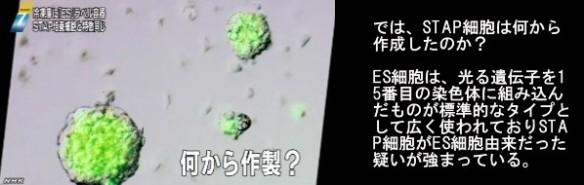 STAP細胞問題_若山教授のマウスと小保方STAP細胞の遺伝子情報の不一致_画像06