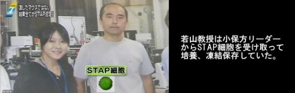 STAP細胞問題_若山教授のマウスと小保方STAP細胞の遺伝子情報の不一致_画像01-1