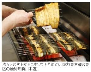 ニッポンが世界のウナギを食い尽くす日_画像4