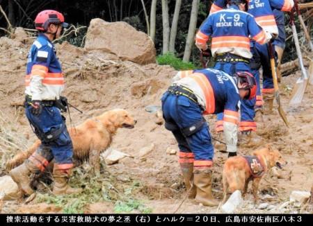 災害救助犬「夢之丞(ゆめのすけ)」とハルクの画像_広島土砂災害の現場