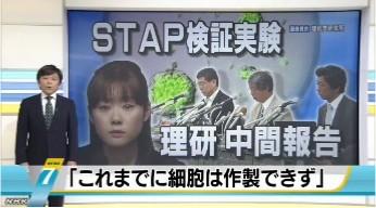 """理研が中間報告 """"STAP細胞はできず""""_NHKニュース画像01"""